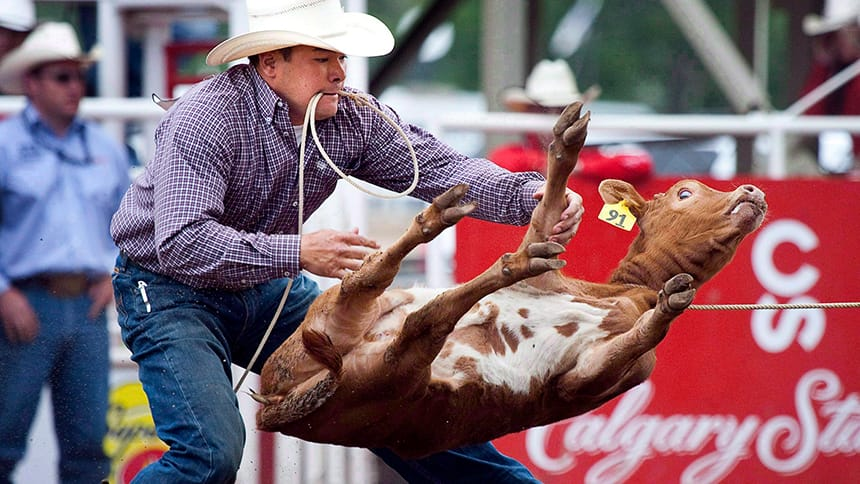 Man holds rope in his mouth while he wrangles a calf.