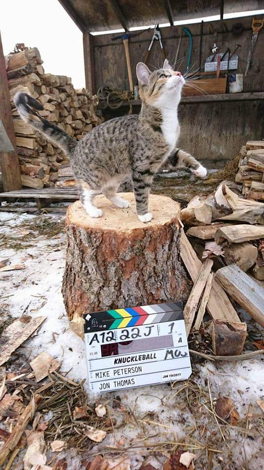Cat stands on log near outdoor woodpile near movie clapperboard.