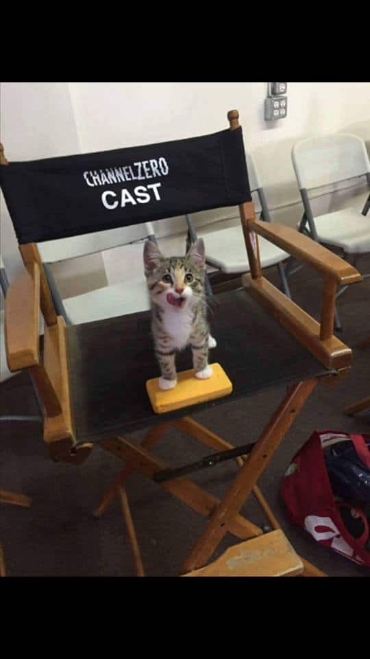 Cat stands on movie chair that says Channel Zero cast on it.