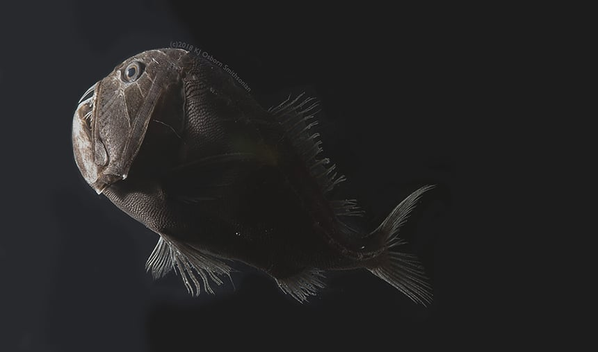 Photo depicts a dark, ghouly fish cast in a tiny amount of light from a camera flash