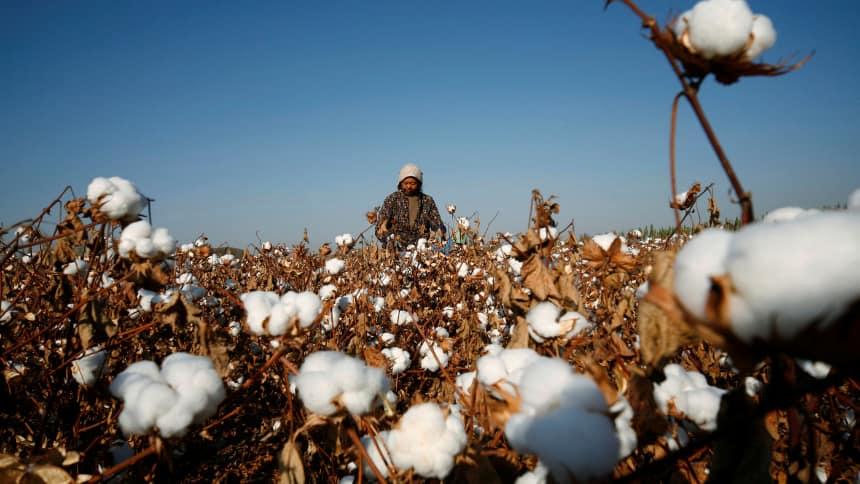Woman working in cotton field