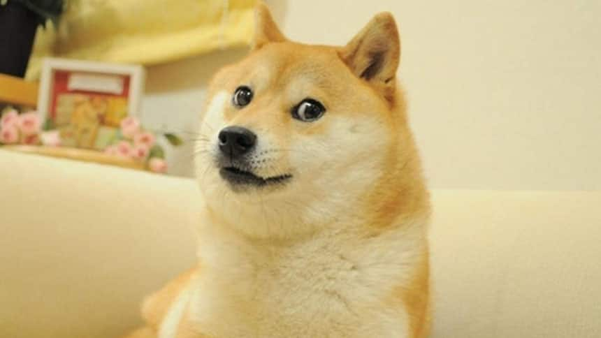 A shiba inu dog that inspired the doge meme is picture.