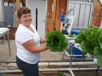 pateys_lettuce.jpg