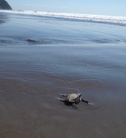 http://www.cbc.ca/labradormorning/turtle_03.jpg