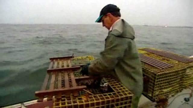 Lobster Hatcheries