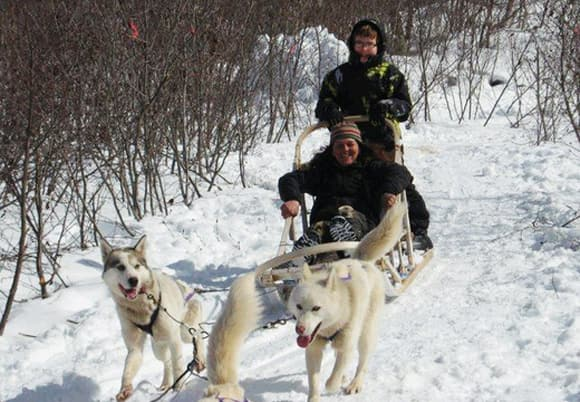 Dog sledding in Corner-Brook