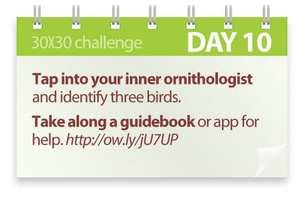 Challenge #10