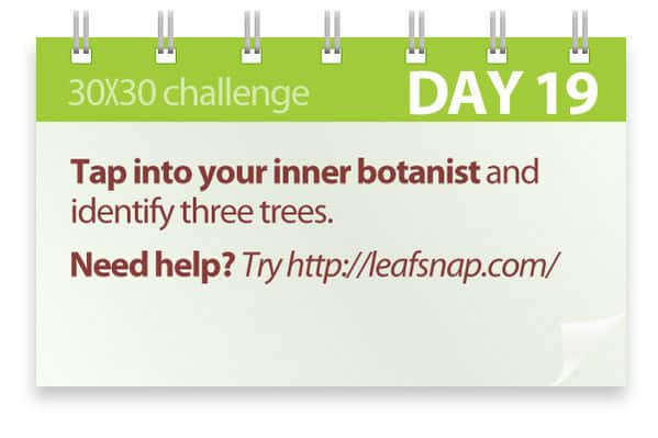 Challenge #19