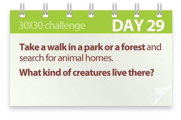 Challenge #29