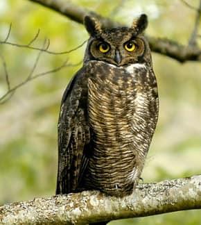 challenge28-owl-brandanlally-290.jpg
