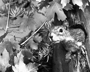 challenge29-squirrelchipmunk-cbcstill290.jpg