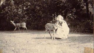 white-tailed deer Bunbury ca 1950.JPG