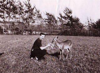 white-tailed deer in Bunbury.JPG