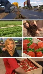 StrawberryFeilds.jpg