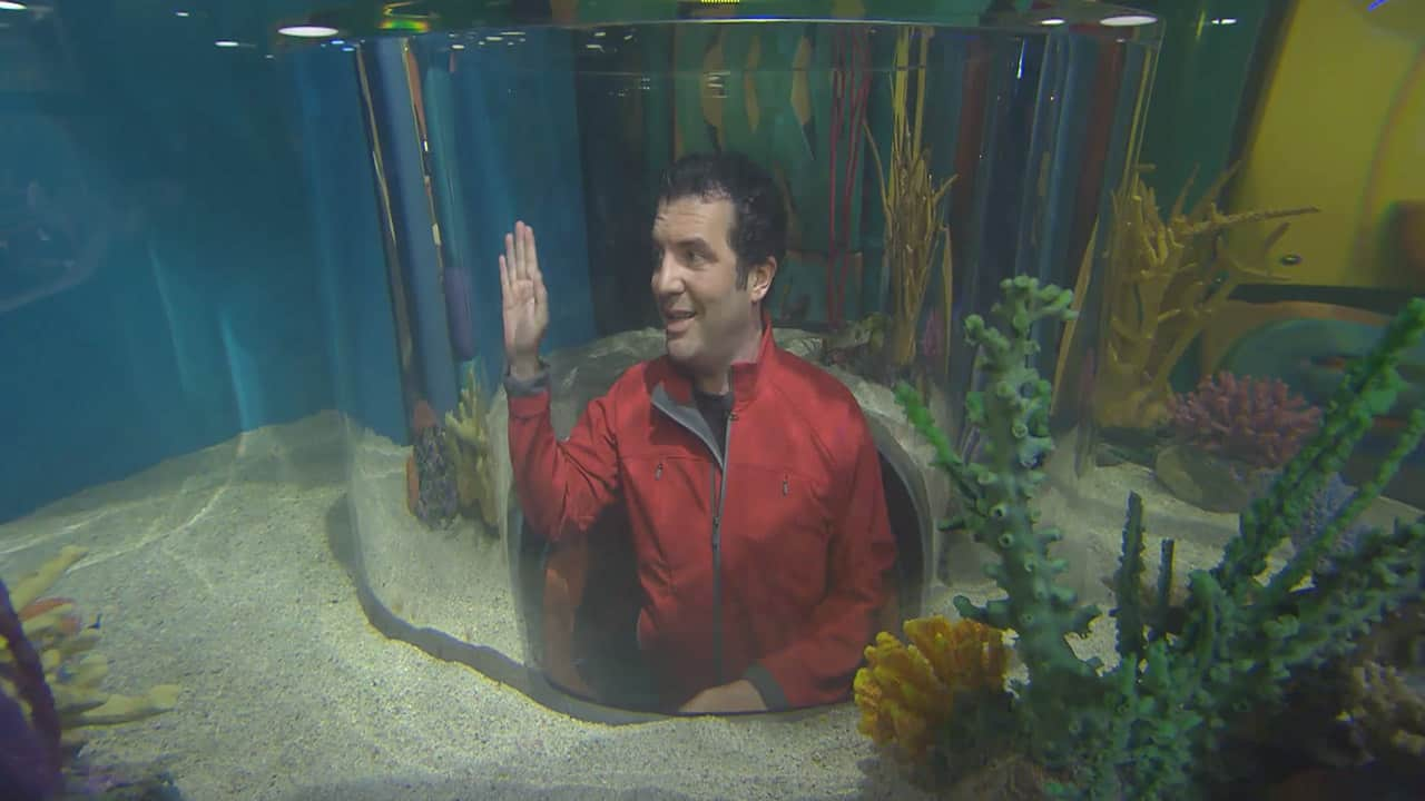 Fish aquarium in canada - Clips Rick At Ripley S Aquarium Of Canada Rick Mercer Report Tuesdays At 8pm On Cbc On Cbc Television