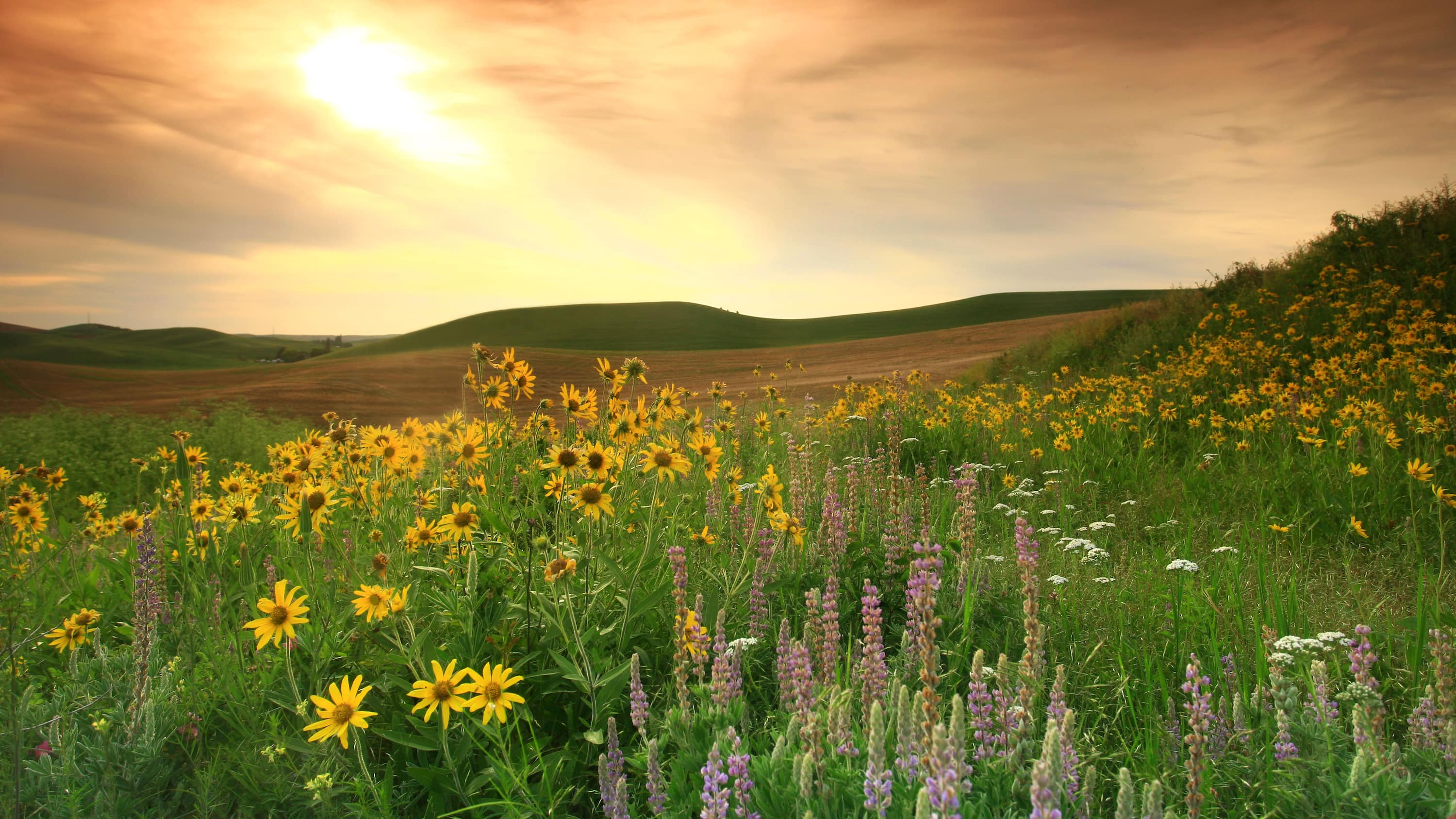 Grasslands: A Hidden Wilderness: Canada's beautiful prairie grasslands are  among the most endangered ecosystems in the world