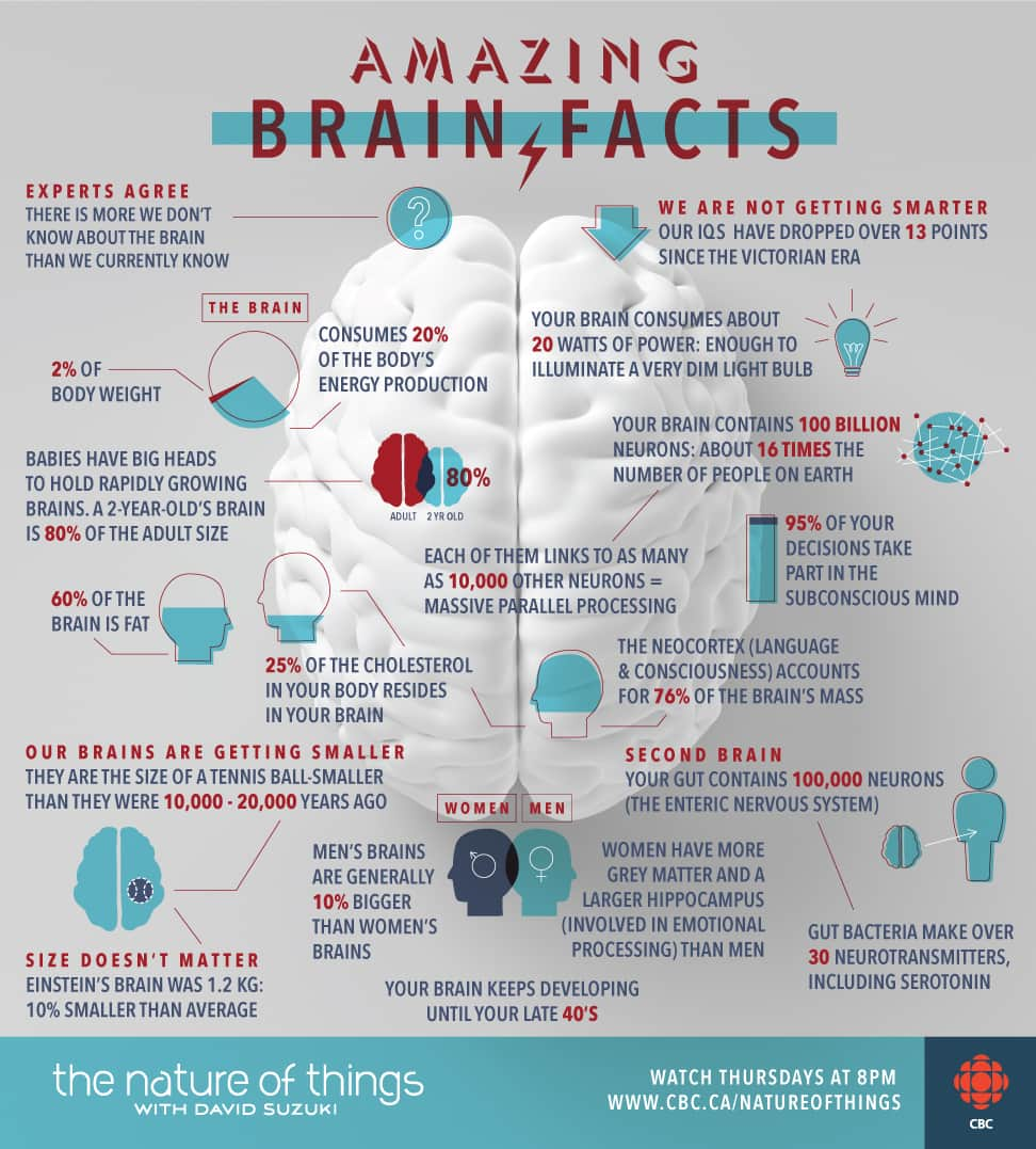 My Brain Made Me Do It  Amazing Brain Facts