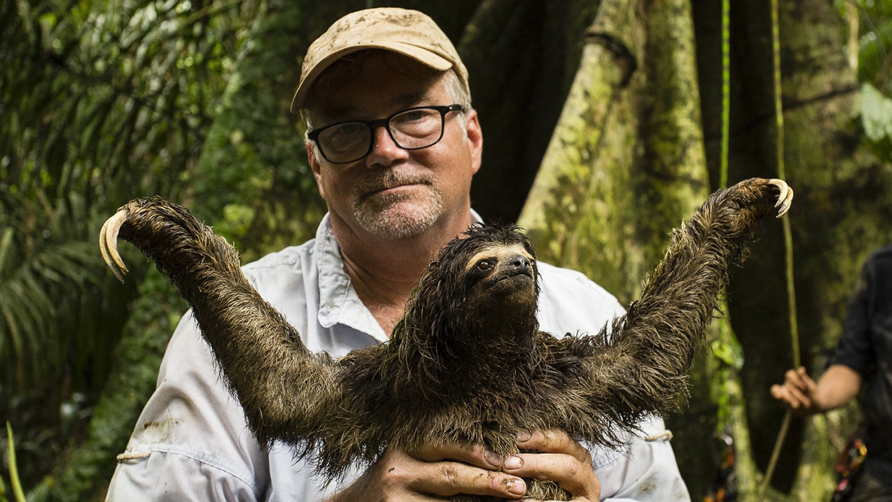Could Sloth Fur Hold The Key to a New Wonder Drug?