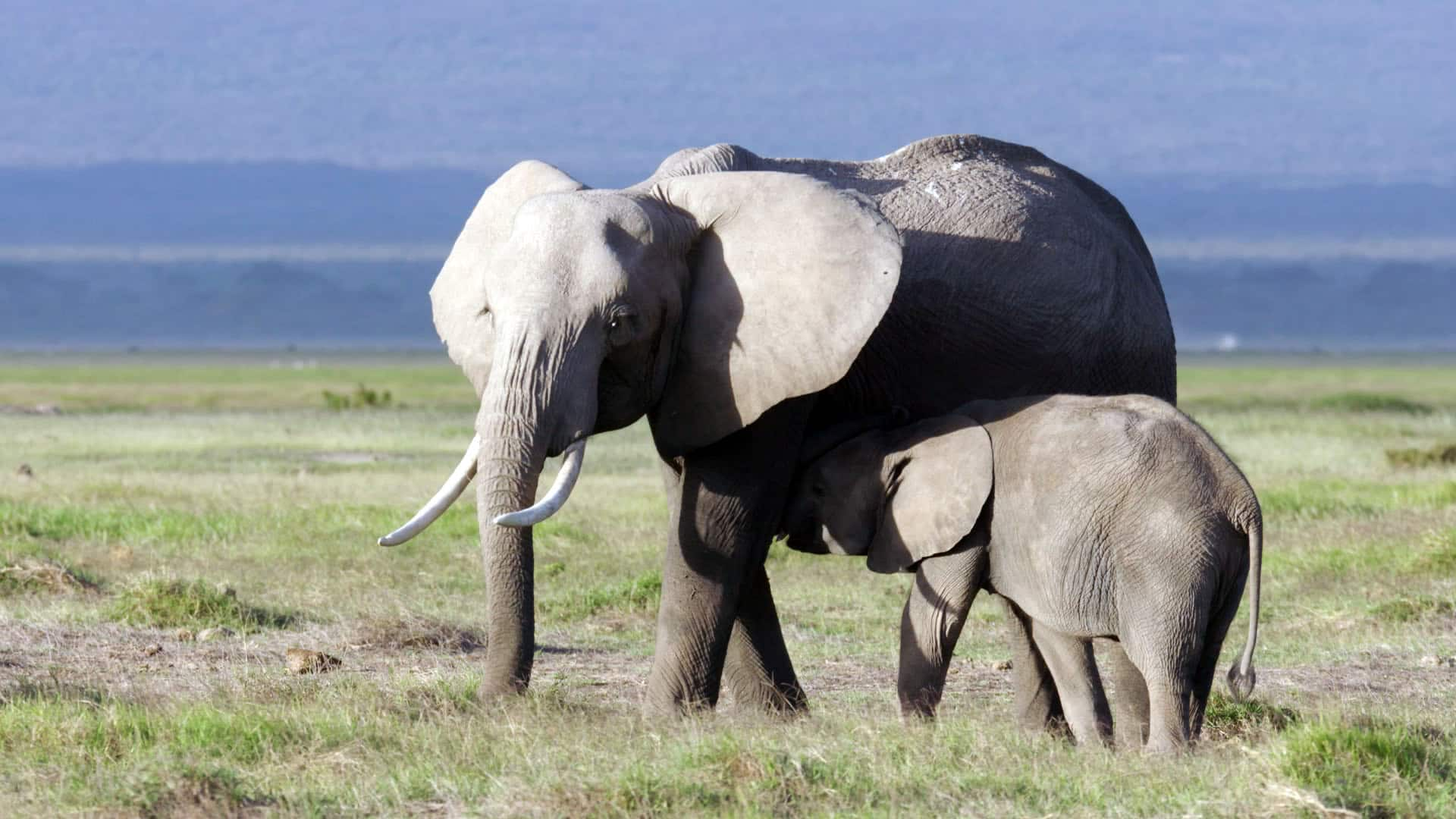 New research shows that elephants and other animals can suffer from PTSD