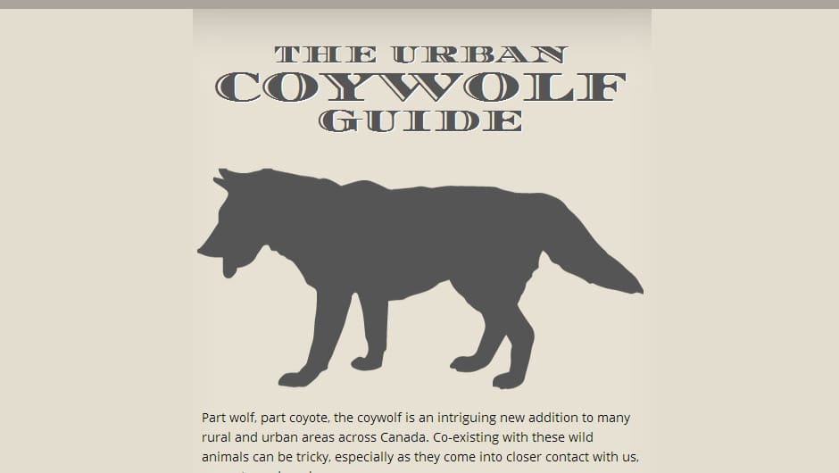 Infographic: Urban Coywolf Guide