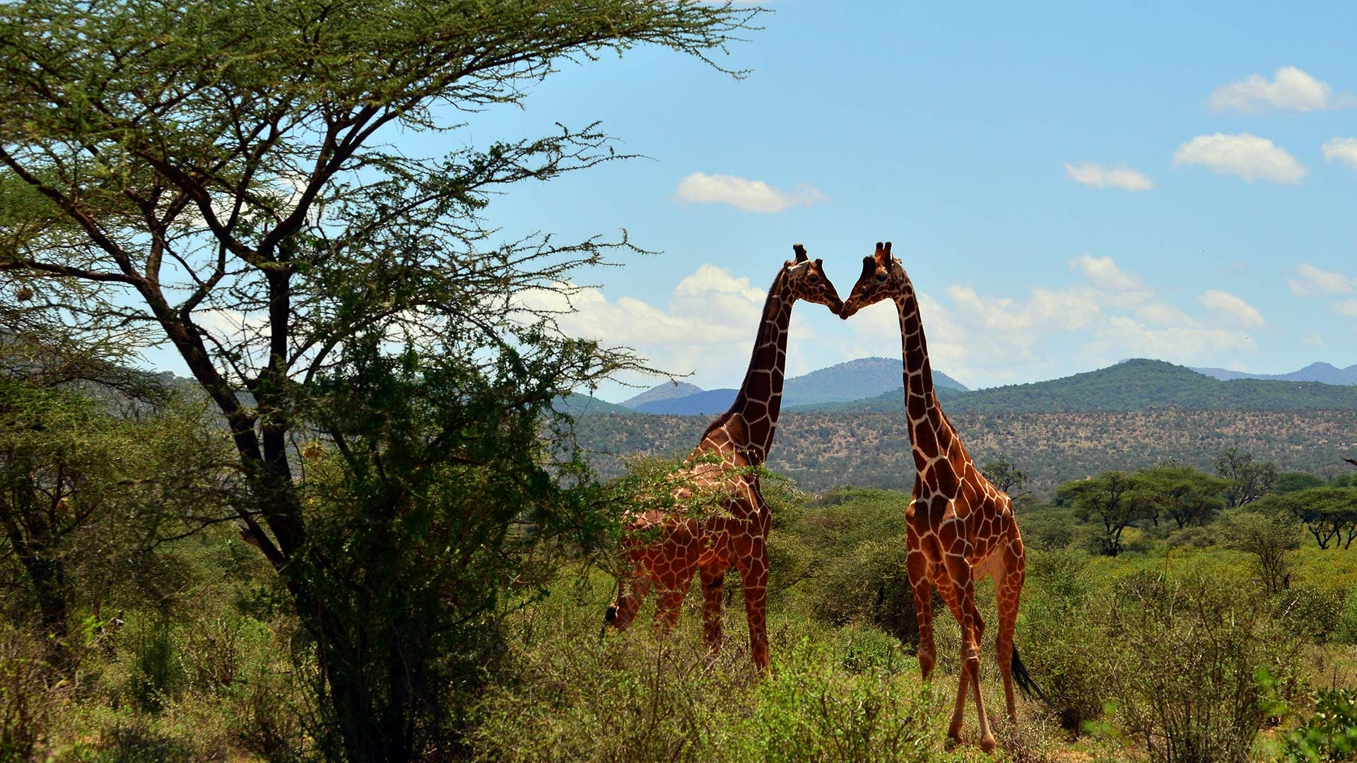 Giraffes: What You Can Do To Help