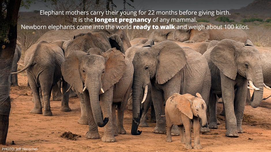 wise elephant quotes wwwpixsharkcom images galleries