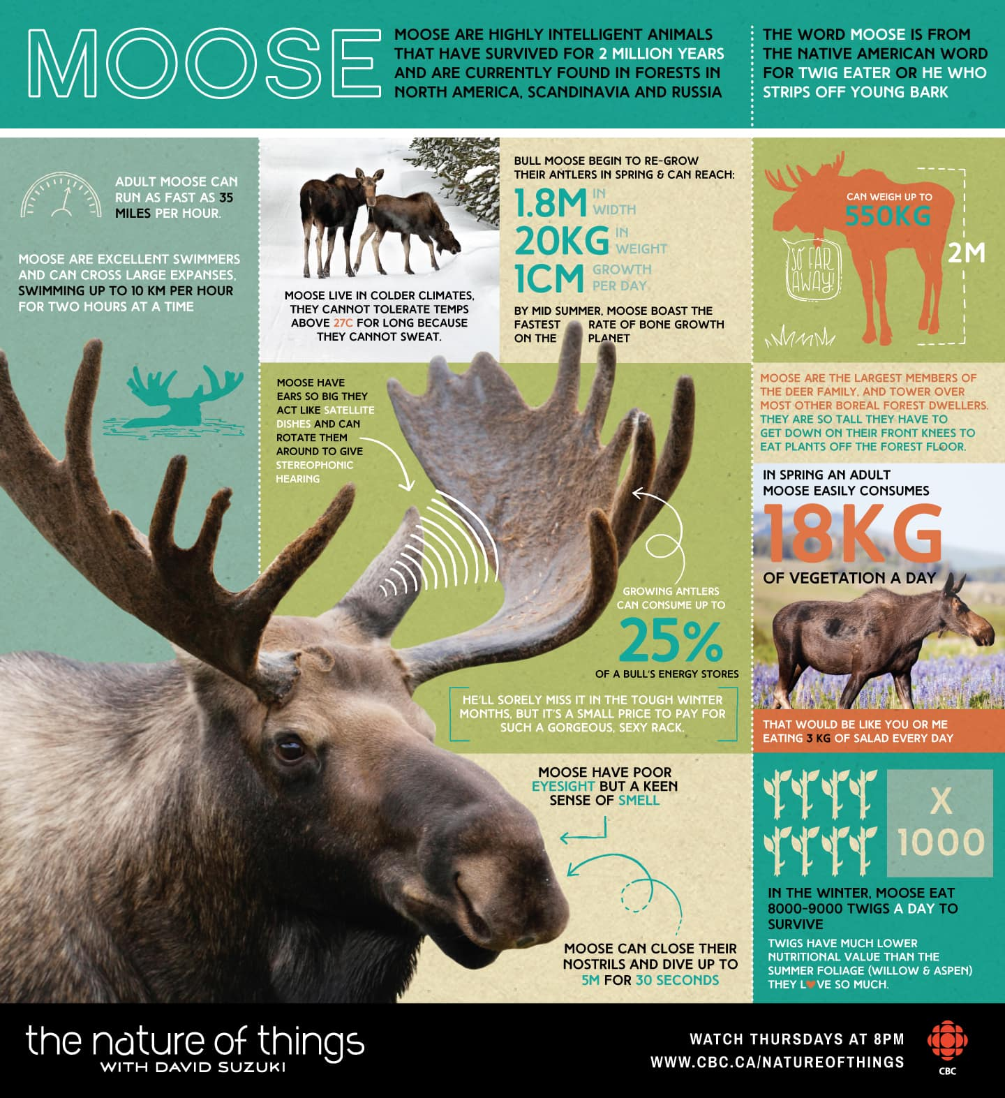 Moose are highly intelligent animals that have survived for 2 million years and are currently found in forests in North America, Scandinavia and Russia.