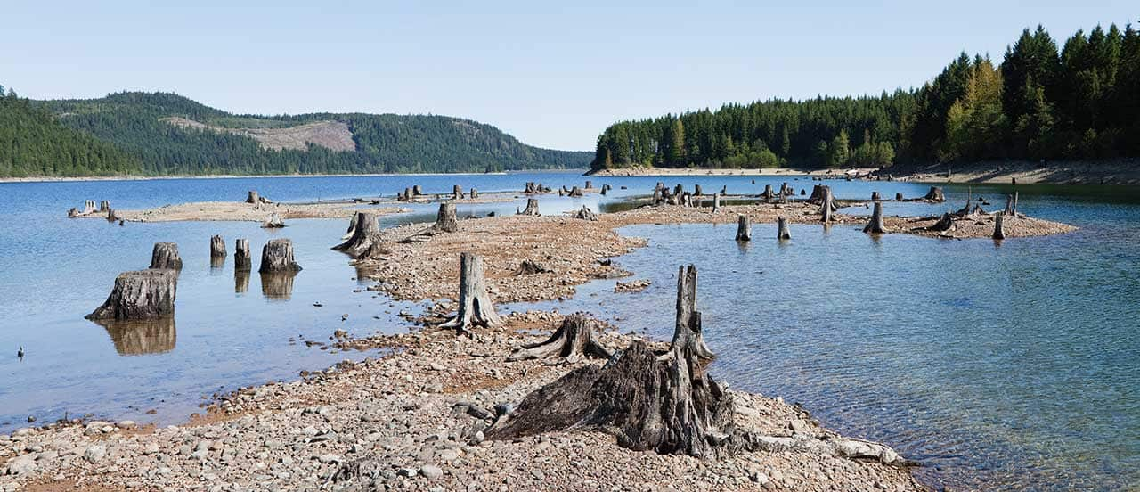 lake levels low and tree stumps