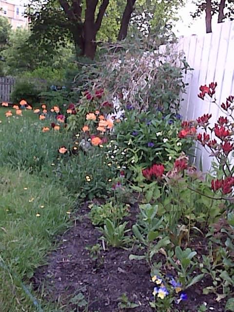zzzzzzzzzzzzzzzzzflowers.JPG