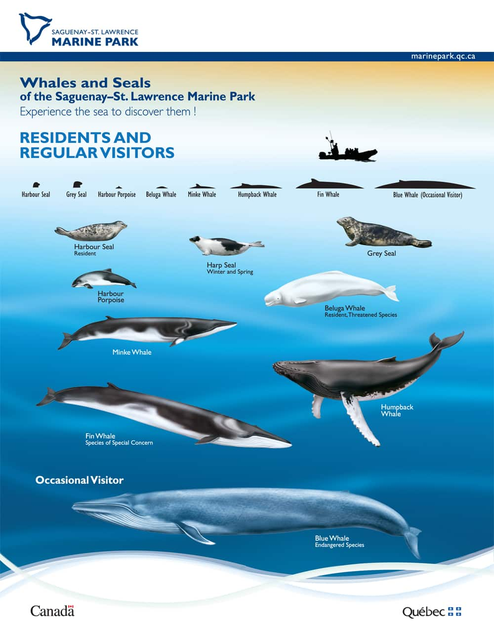 Whales and seals of Saguenay-St. Lawrence Marine Park