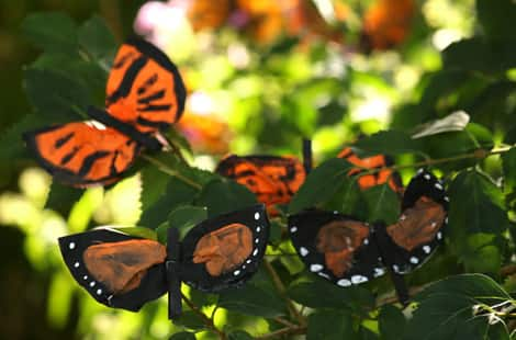 A bunch of coffee filter monarch butterflies clipped to branches in the garden