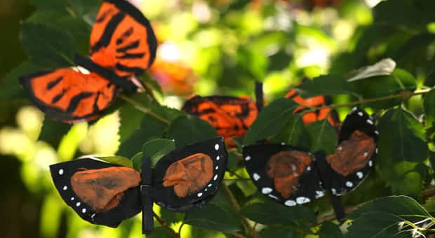 Completed coffee filter monarch butterflies clipped to branches in a garden