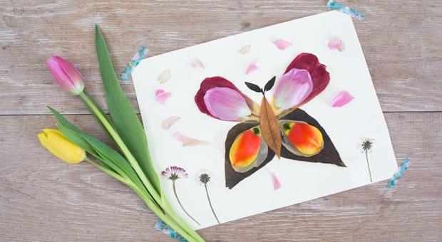 Daisy's flower petal butterfly
