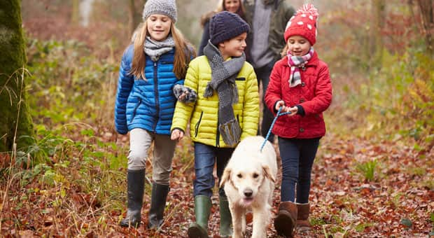Three kids helping to walk a dog while parents walk in the background
