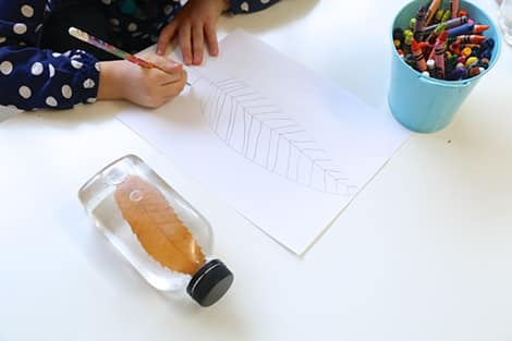 child draws a picture of the leaf in the jar