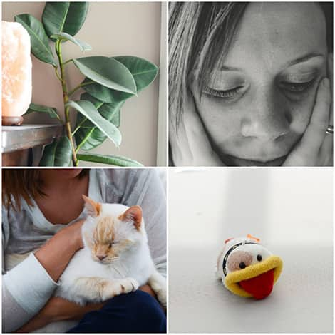Plant, close-up portrait, cat and knitted stuffie collage.