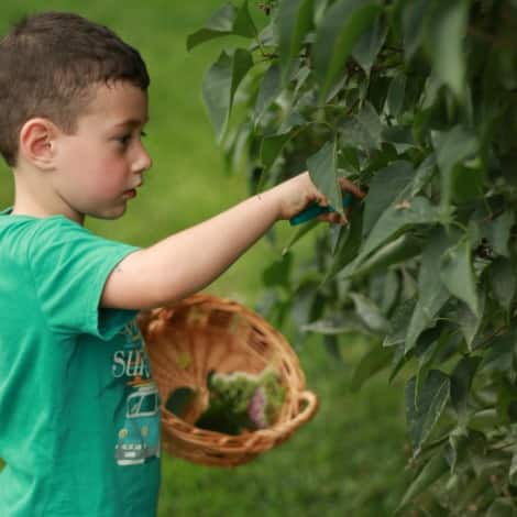 A boy outside picking leaves