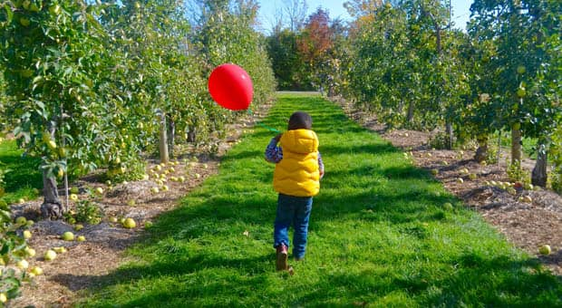 The back of a little boy in a field holding a red balloon