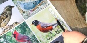 birdwatching_lead_lmyers