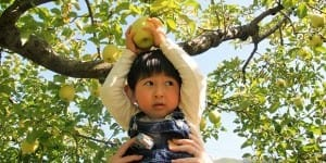 farm-autumn-fruit-apple-grove-child-harvesting-boy-apple-tree-kid-harvest-harvest-apples-picking_t20