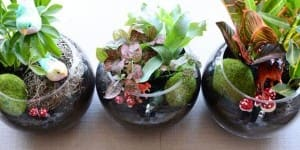 terrariums_lead_jdubien