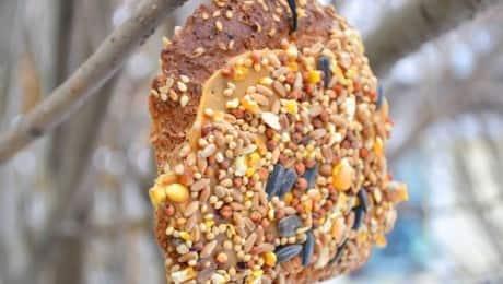 Bird-feeders-3