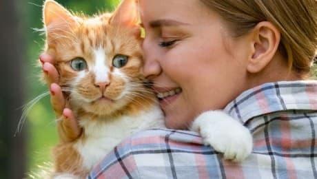 SPAYED-CAT