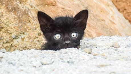 kitten-covid-pet