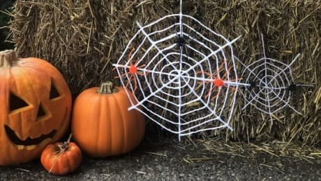 spiderwebs-lead