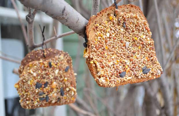 Stale bread bird feeders hanging from trees.