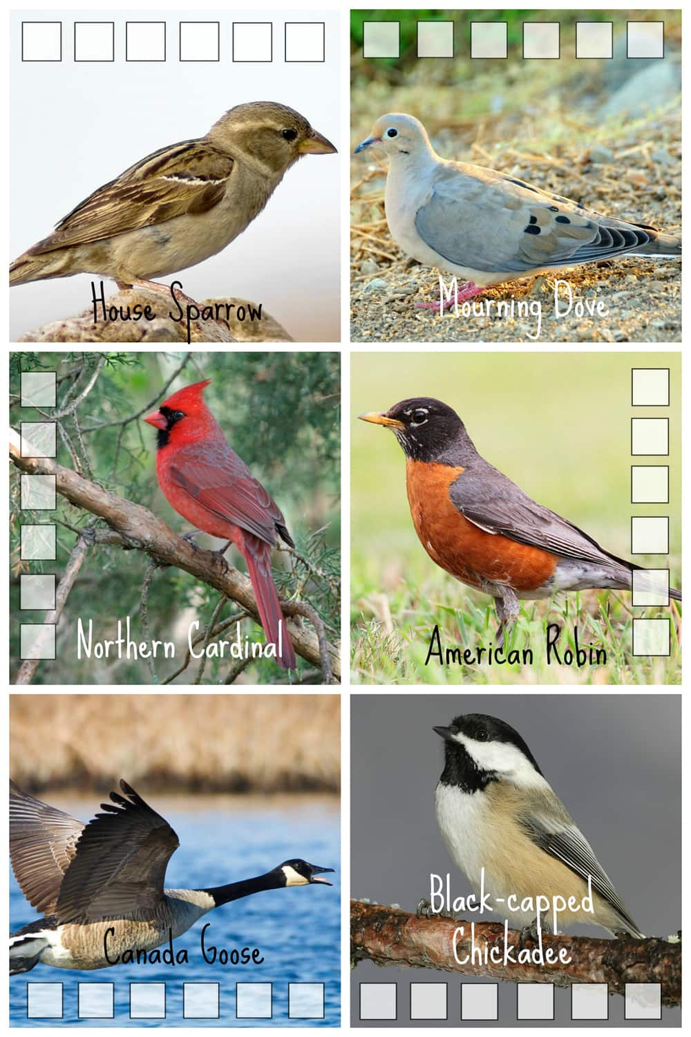 Photos of common birds in southern Ontario.