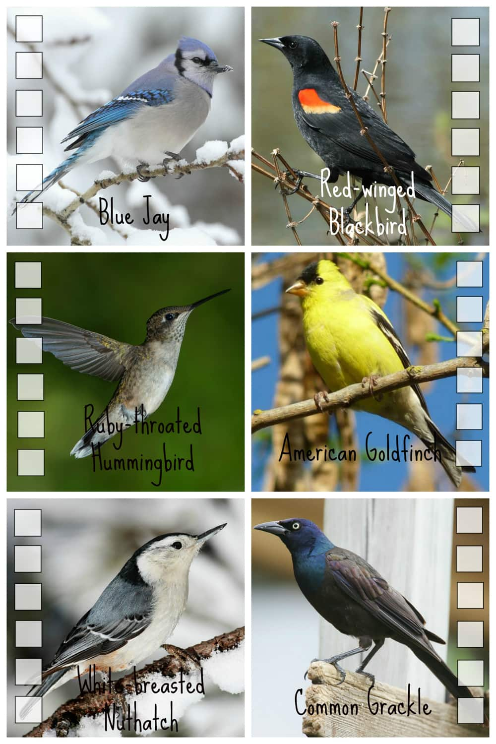 Photos of common birds in Ontario