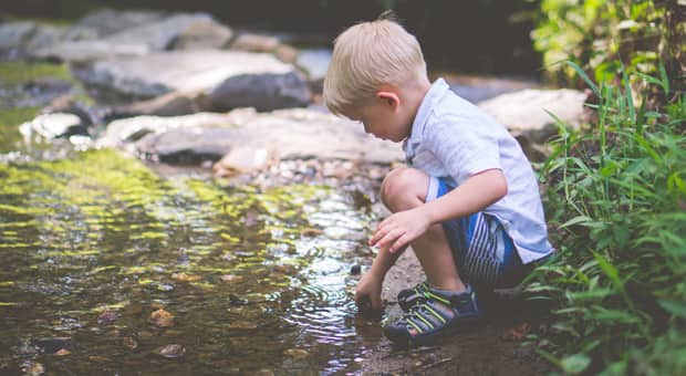 a child is investigating a pond for species of frogs