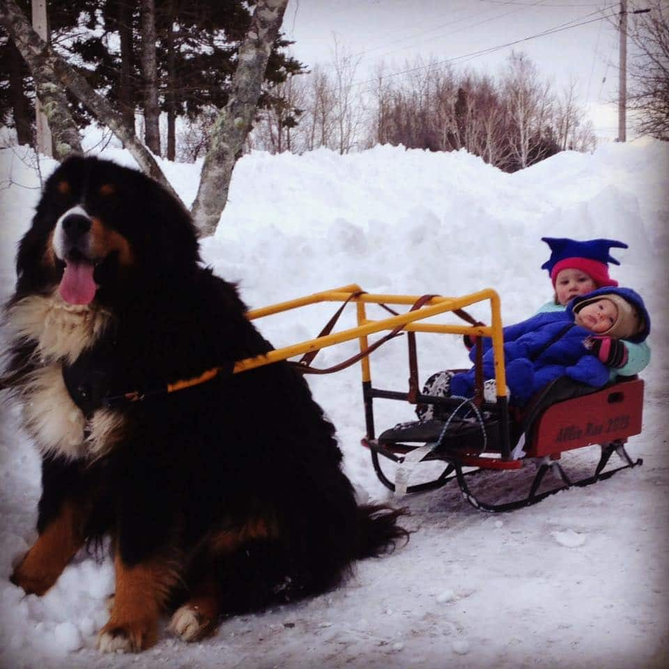 Two kids are pulled on a sled by a dog.